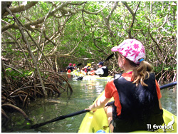 photo mangrove kayak